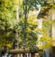 Засадихме над 2000 дървета тази есен: Фандъкова
